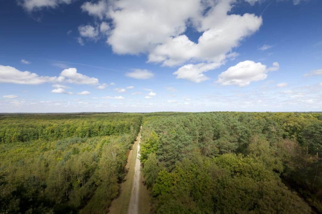 forêt pefc