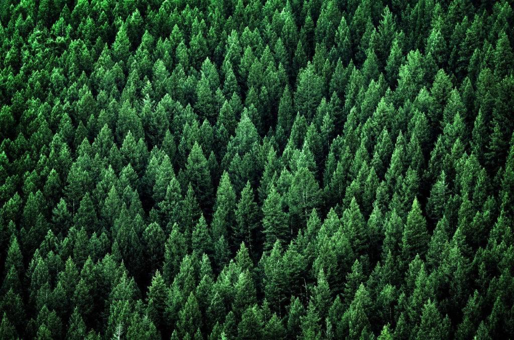 forêt prefabricationbois.com