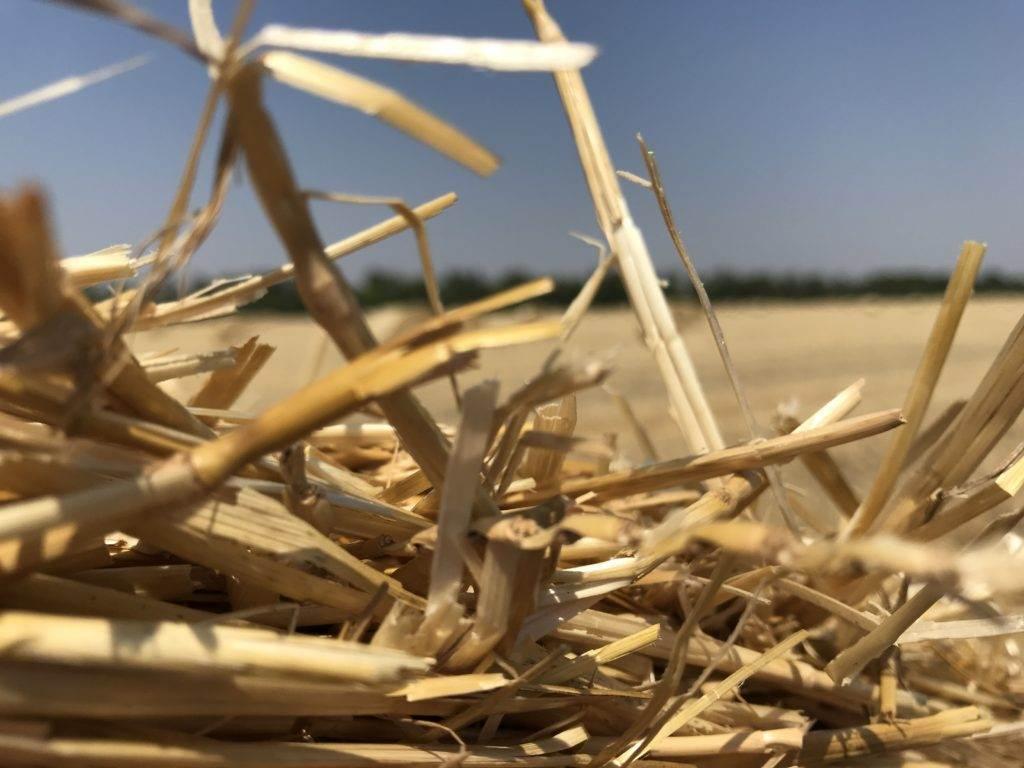 paille de blé construction - c